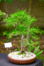 Beautiful bonsai botanical garden Royalty Free Stock Image
