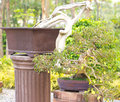 Beautiful bonsai trees pot Stock Image