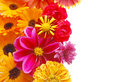 Beautiful border from fresh flowers Royalty Free Stock Photos