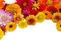 Beautiful border from fresh flowers Stock Photography