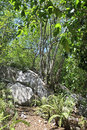 Beautiful boulders and trees on cousin island the seychelles Stock Photo
