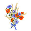 Beautiful bouquet of cornflowers, poppies and wheat spikelets, tied with silk ribbon Royalty Free Stock Photo