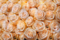 Beautiful bouquet of cream-colored roses.. Abstract background. Stock Photography