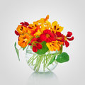 Beautiful bouquet of nasturtium flowers in a vase. Tropaeolum Royalty Free Stock Photo