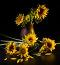 Beautiful bouquet of sunflowers in vase on a black table over black background Royalty Free Stock Photo