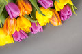 Beautiful bouquet of tulip flowers on grey Royalty Free Stock Images