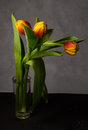 Beautiful bouquet of tulips of different colors in the drops Royalty Free Stock Photo