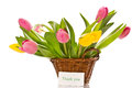 Beautiful bouquet of tulips on a white background Royalty Free Stock Photo
