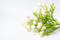 Beautiful Bouquet Of White Bud...