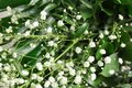 Beautiful bouquet with white flowers and green leaves, closeup. Floral background Royalty Free Stock Photo