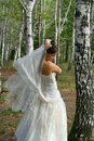 Beautiful bride in birch grove Stock Photos