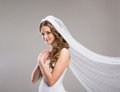 Beautiful bride with veil portrait of isolated over gray background Royalty Free Stock Images
