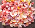 Beautiful bright background of fresh rose petals Royalty Free Stock Photo