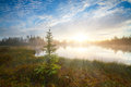 Beautiful bright dawn sunrise sunset tundra forest wild lake spruce foreground red sun beam ray through fog reflection cloud Royalty Free Stock Photo