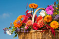 Beautiful, bright fall flowers in a wicker basket Stock Photography