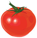 Beautiful bright tomato red ripe color with green inlays round Stock Photos