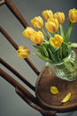 Beautiful bright yellow tulips still life glass vase antique wooden chair Stock Photo