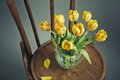 Beautiful bright yellow tulips still life glass vase antique wooden chair Royalty Free Stock Photos