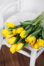 Beautiful bright yellow tulips in still life lying on antique white chair bouquet of for your favorite a room Stock Image
