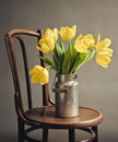 Beautiful bright yellow tulips still life old milk can antique wooden chair Stock Photo