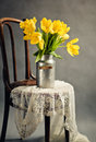 Beautiful bright yellow tulips still life old milk can antique wooden chair lace cloth Royalty Free Stock Images