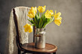 Beautiful bright yellow tulips still life old milk can antique wooden chair lace cloth Stock Image