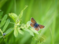 Beautiful brown butterfly on spring grass Royalty Free Stock Photo