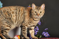 Beautiful brown cat among the flowers in studio Stock Image