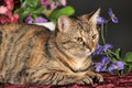 Beautiful brown cat among the flowers in studio Royalty Free Stock Photos