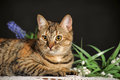 Beautiful brown cat among the flowers in studio Royalty Free Stock Photography
