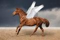 Beautiful brown pegasus horse galloping wild on sky Royalty Free Stock Photo