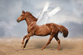 Beautiful brown pegasus horse galloping wild on sky Royalty Free Stock Photo