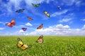 Beautiful Butterflies Flying F...