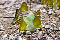 Beautiful butterfly along mountain creek nature Royalty Free Stock Image