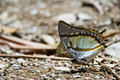 Beautiful butterfly along mountain creek nature Stock Photos
