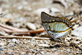Beautiful butterfly along mountain creek nature Royalty Free Stock Photo