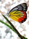 A beautiful butterfly and cactus Royalty Free Stock Photo