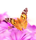 Beautiful butterfly on the flower Royalty Free Stock Photo