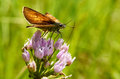 Beautiful butterfly on a flower drinking nectar Royalty Free Stock Photo