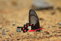 Beautiful butterfly on ground in a forest Royalty Free Stock Photography