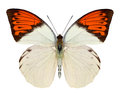 Beautiful butterfly isolated on white Royalty Free Stock Photo