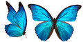 Beautiful Butterfly Isolated O...