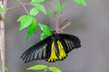 Beautiful butterfly perched on a leaf photo taken on march rd Royalty Free Stock Images