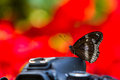Beautiful butterfly sitting on the camera nature photography colorful background Royalty Free Stock Photography