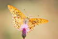Beautiful butterfly spanned wings ready to fly Royalty Free Stock Images