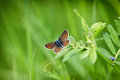 Beautiful butterfly on spring grass Royalty Free Stock Photo