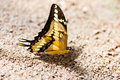 Beautiful butterfly on stone Royalty Free Stock Photo