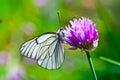Beautiful Butterfly On Summer ...