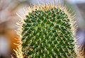 Beautiful cactus with backlit Royalty Free Stock Photo