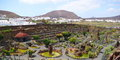 Beautiful cactus park on lanzarote island spain Royalty Free Stock Photo